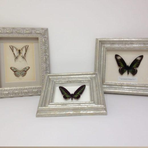 Butterfly framing Berkshire